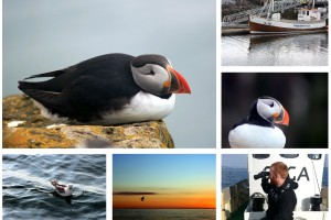puffin collage